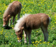 2brownfoals.jpg